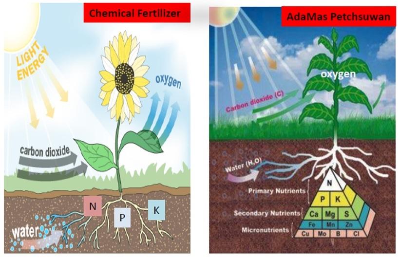 chemical fertilizer vs organic fertiliser